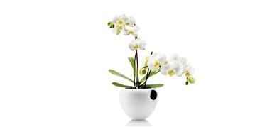 Image of   Orkidepotte hvid
